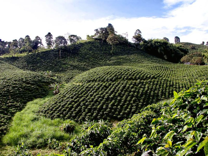Sector agroindustria invertir en Colombia