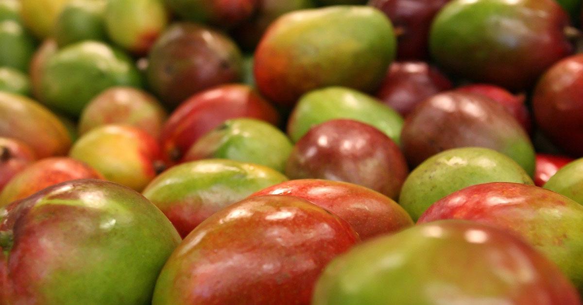 Exportar a Costa de Marfil: Oportunidades en el sector agrícola en la era post COVID-19