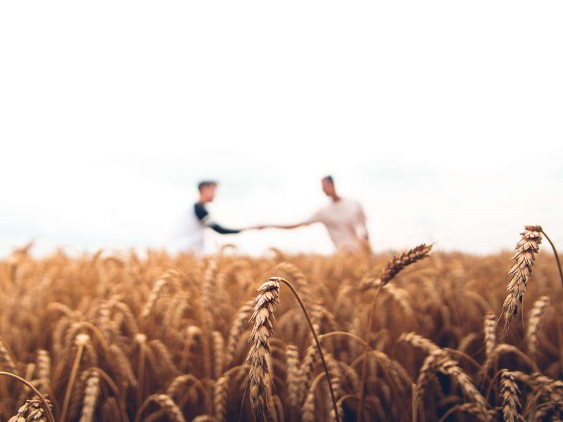 Ley de Promoción Agraria Perú