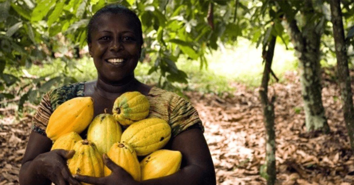 Secteur Agricole en Côte d'Ivoire